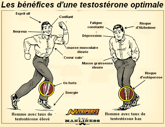 testosterone-musculation-benefices