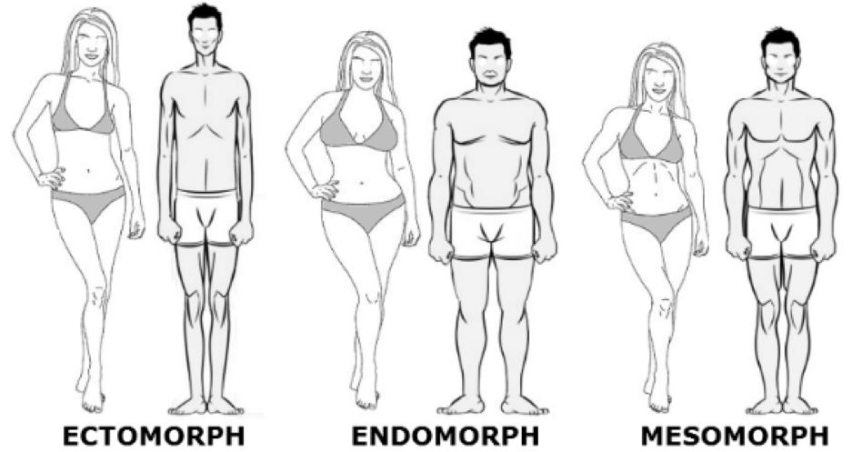 mesomorphe-morphologies