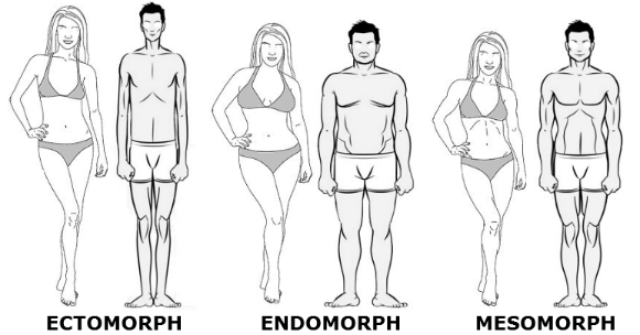 ectomorphe-morphotypes